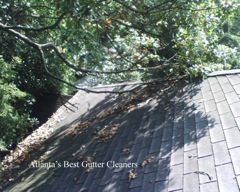 Roswell's Best Gutter Cleaners does tree pruning of limbs coming in range of the gutters.